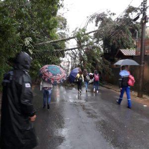 Distrito do Sapé, em Barbacena, teve queda de árvores. Foto: redes sociais